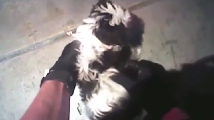 Good Guys: Police Officers In New Mexico Save Puppy Choking On Cheese