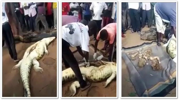 Little Boy's Remains Are Pulled From Crocodile